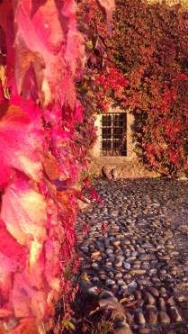 Eclat d'automne