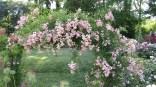 Brooklyn. Jardin botanique